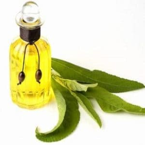 Camphor Essential Oil