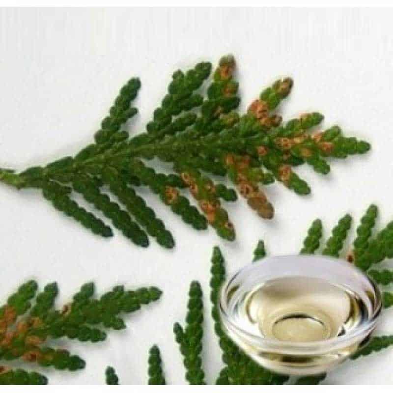Cypress Hydrosol