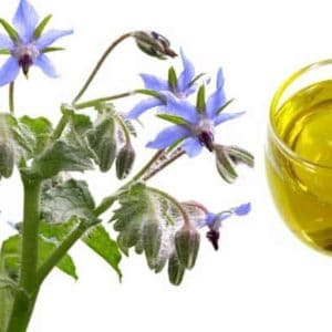 Borage Seed Carrier Oil